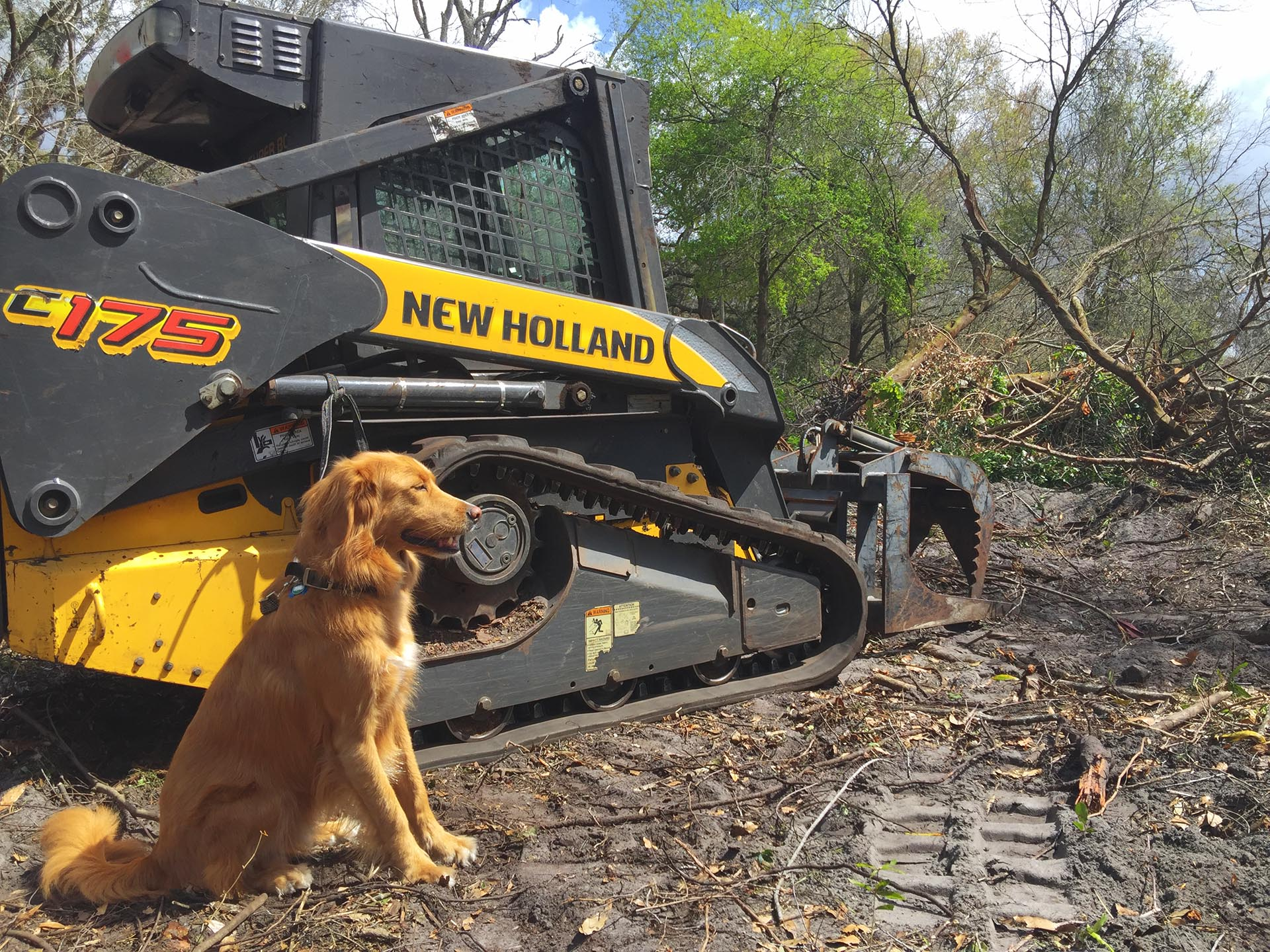 Dog and the excavator